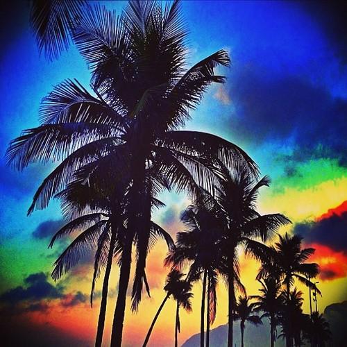 palmeras-verano2013