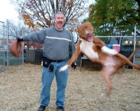 Fotobomba perro