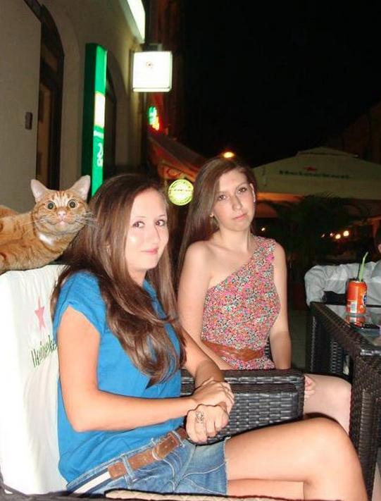 Fotobomba gato