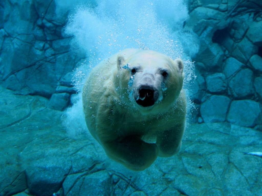 oso-polar-cosas-random