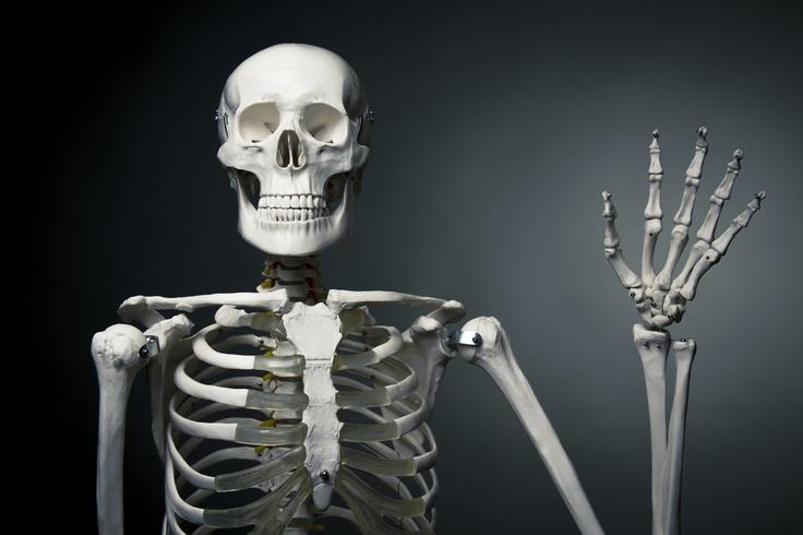 http://el124.com/wp-content/uploads/2013/09/Datos-curiosos-del-cuerpo-humano.jpg