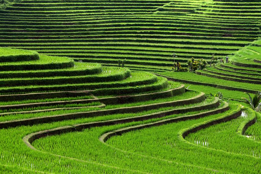 lugares-increibles-bali_rice_terraces