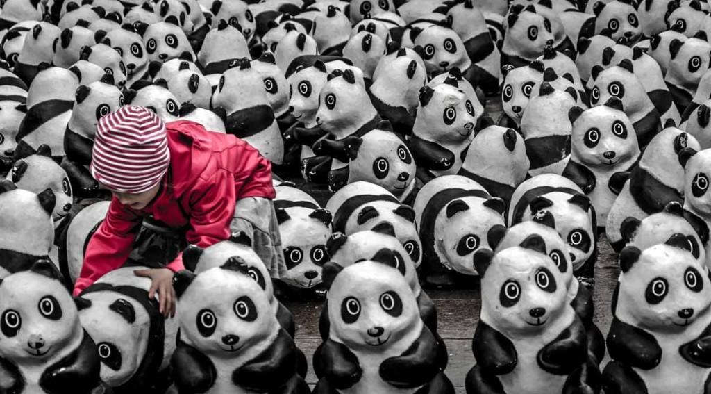 Participante Foto del año de National Geographic 2013