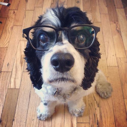 datos curiosos de perros