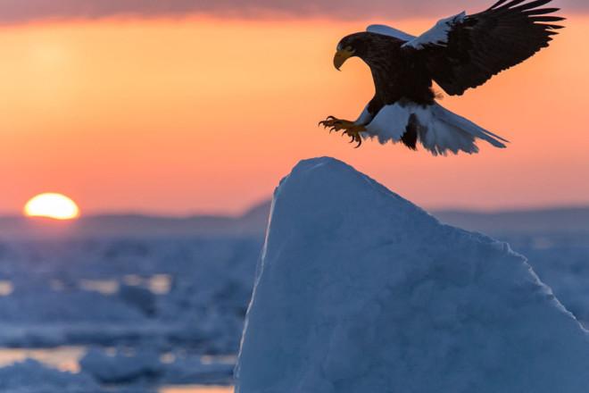 mejores-fotos-de-national-geographic-en-2014-47