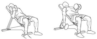 bíceps y tríceps