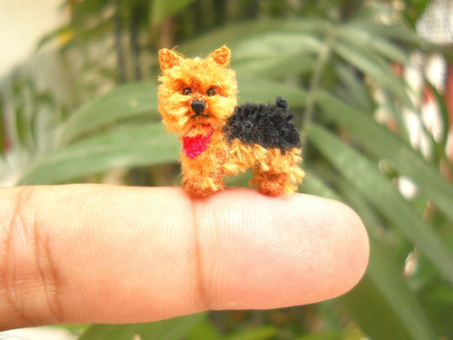 mini dogs 5