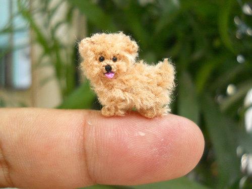 mini dogs 6