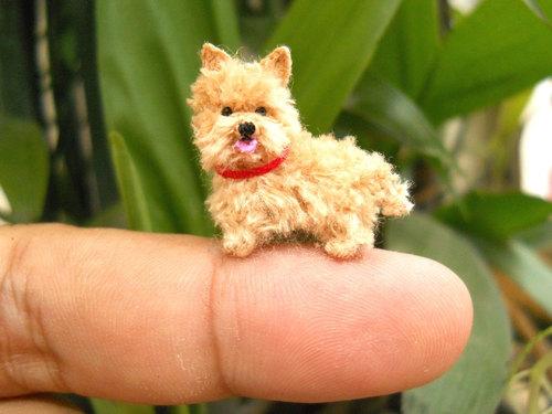 mini dogs 9