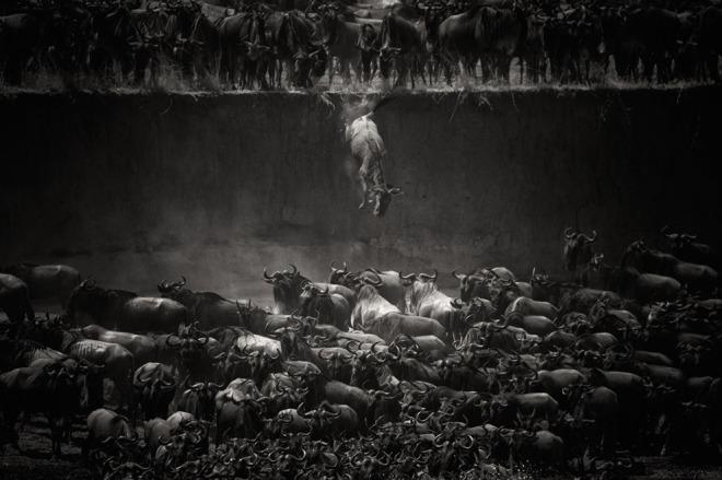 Las 15 mejores fotos de 2014 según National Geographic