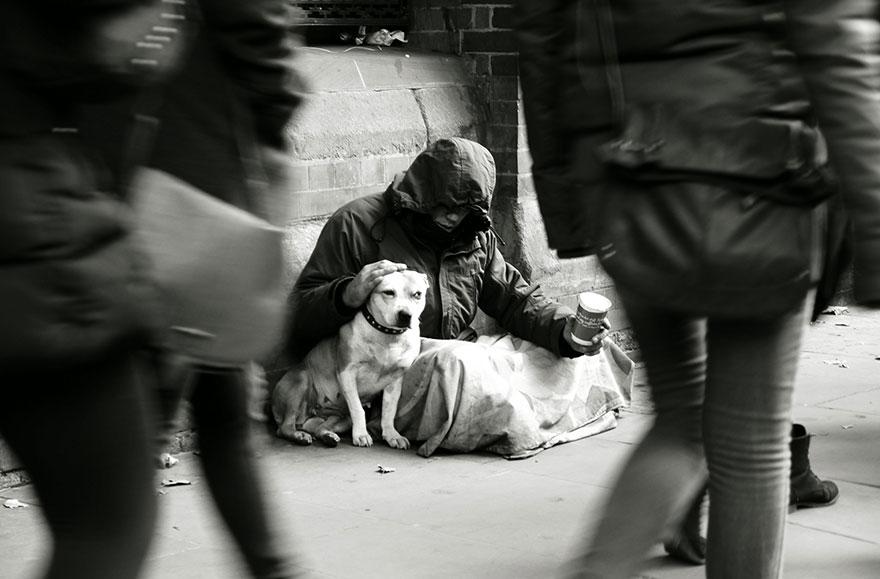 Perros de los Homeless