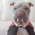 el-mas-tierno-cachorro-shar-pei-de-instagram-7