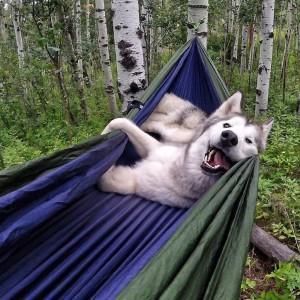 Salir de vacaciones con tu mejor amigo, el perro