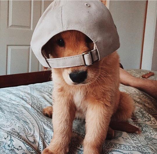 Estilo y vida para el fin de semana - Pepito Cachorro