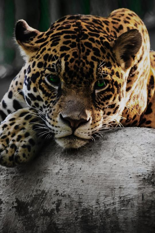 Nuevo e increíble random post para cerrar el viernes - Jaguar