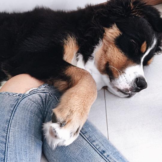 Random post solo por que si - Perro - Cachorro