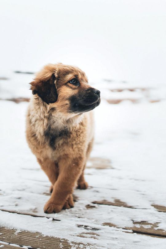 Llegó el fin de semana con el random post - Cachorro
